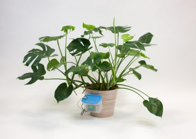 Peter – the smart plant